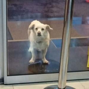 病院前で飼い主を待ち続けた犬