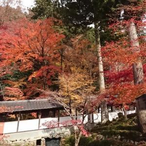 京都・近江路紅葉三昧②