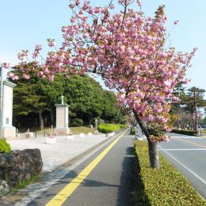 別府の町は花盛り