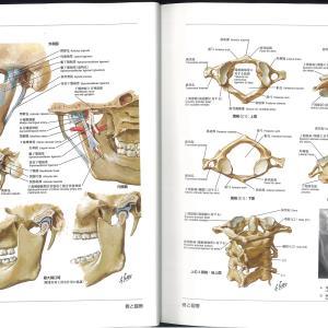 人体のフレーム構造
