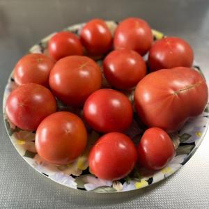 トマト祭りだ〜!