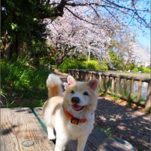 エルと桜を撮る会