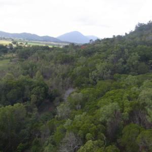 バロンゴージ国立公園の熱帯雨林(クイーンズランド州)
