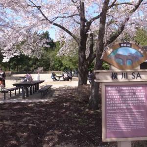 横川サービスエリアの桜(群馬県安中市)