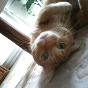 飼い猫(19歳)