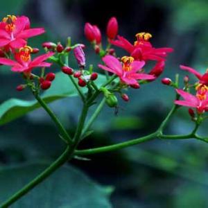 神代植物公園 温室の花(10月6日 寫壇太陽撮影会)
