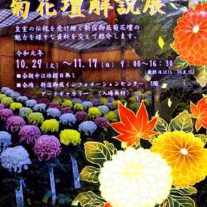 菊花壇 Ⅱ (11月10日 新宿御苑 寫壇太陽撮影会)