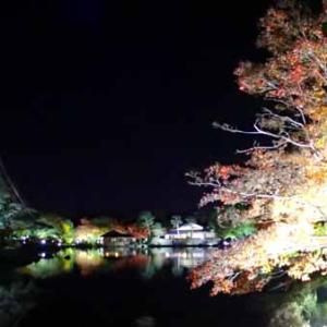 黄葉紅葉まつり ライトアップ (11月 昭和記念公園)