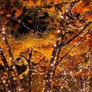 丸の内 夜の散歩 (11月16日)