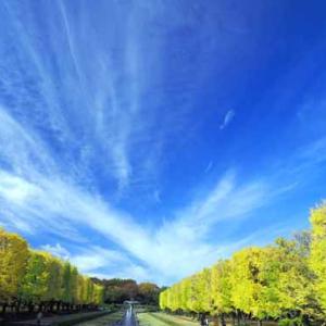 黄葉紅葉の昭和記念公園 (11月17日)