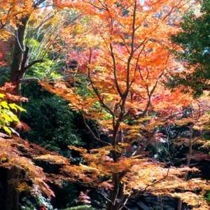 小石川後楽園で晩秋を愉しむ(12月8日 寫壇太陽撮影会)
