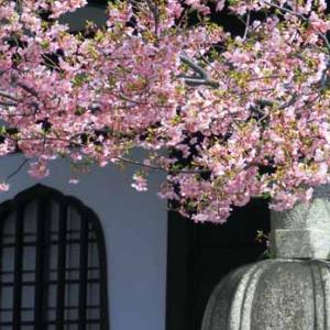 春隣(2月22日 中野区上高田 金剛寺)