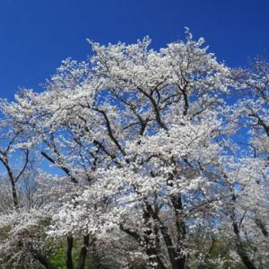 春惜しむ神代植物公園(3月24日)