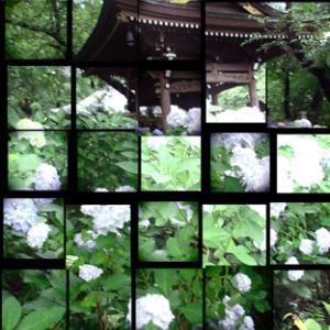 妙楽寺の紫陽花 PARTⅡ(2020年6月14日 寫壇太陽撮影会)