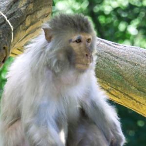 井の頭自然文化公園にて Ⅱ(令和2年7月2日)