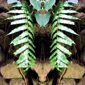 夢の島熱帯植物館 Ⅲ(令和2年6月30日)