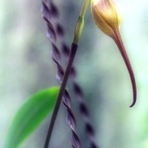 温室の花(2020年7月5日 神代植物公園 寫壇太陽撮影会にて)