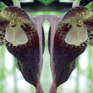 花の心象造形(7月5日 神代植物公園の温室 寫壇太陽撮影会にて)