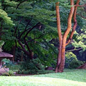 秋雨の小石川後楽園 (2020年9月25日)