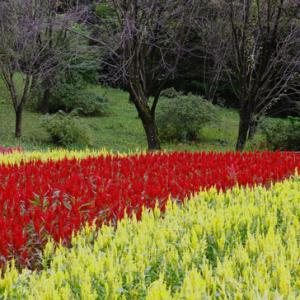 初秋の武蔵丘陵森林公園 (9月27日 寫壇太陽撮影会)