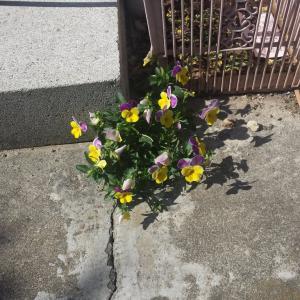 逆境に負けない花
