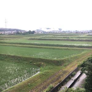 朝から雨☔️
