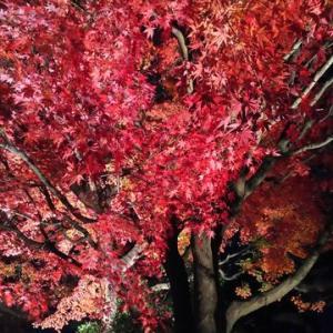 松音寺の紅葉ライトアップ