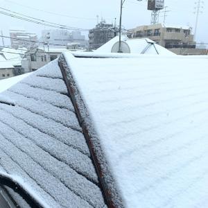 恵の雪となるか