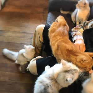 にゃーにゃーにゃー!猫の日
