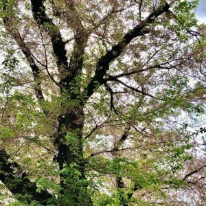 【1週間の運勢】4月5日(月)~11日(日)の九星別運勢
