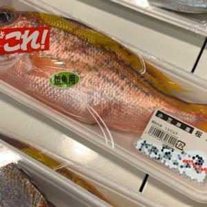 ■ あやしい魚と最近のブーム