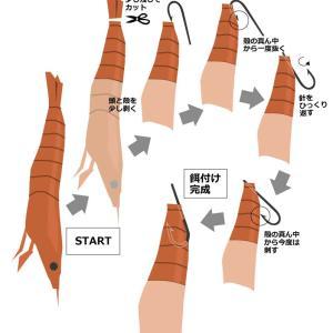 ■ フグ釣りでのエビ餌の付け方(アルゼンチン赤エビ版)