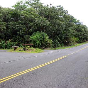 2019ハワイ旅 - 初めてみましたラバツリー