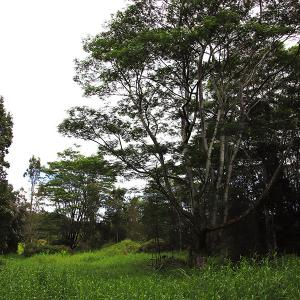 2019ハワイ旅 - 人々を惹きつけるプナの森