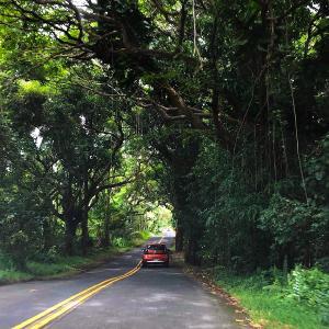 2019ハワイ旅 - 2018年の噴火溶岩流で寸断された別の道