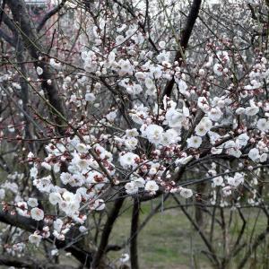 もうすぐ春ですねー