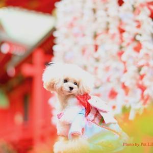 2020年スタート♡初めての愛犬写真教室