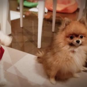 茨城県動物指導センター✦タオル毛布募集中