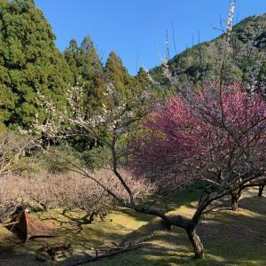 3月2日今日の徳島は晴れです!