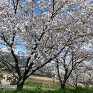 4月13日今日の徳島は雨です!
