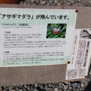 アサギマダラ 蝶 フジバカマ  民芸家具