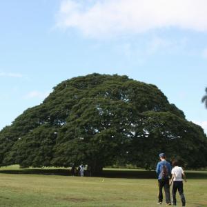 古林亜星 ハワイ この木何の木  民芸家具