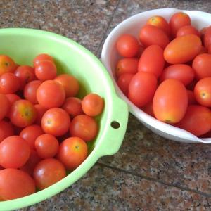 家庭菜園 ミニトマト  トマトソ-ス  民芸家具