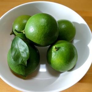 猫の額 82 レモン