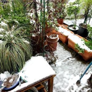 2020・03・29の雪