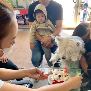 看板犬チャンタ(2才)のバースデーをスタッフ達と看板娘で/ウエスティのぺぺちゃんワンバナご来店!
