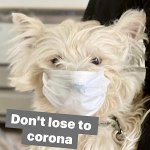 Don't lose to corona キャンペーンしようか?/シュナのルナちゃんシエル君来店