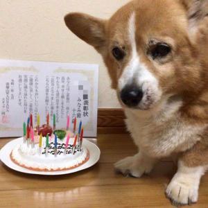 千葉県Eさまコーギーのみなみちゃん16才!お誕生日&表彰状/ウエスティぽんずくんワンバナ健康相談