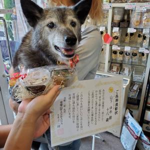 スーパーシニア犬ラガー君とゆめちゃんの表彰式!感動!/ワイヤーフォックスそら君ワンバナ表彰式に!