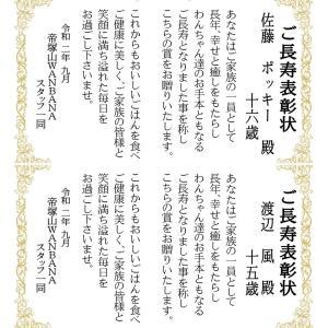 明日25日まで!健康強化月間プレゼント!ご長寿表彰状も/トイプーモアちゃんWANBANAデビュー